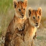 Hilltop Cubs