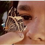 Butterfl.